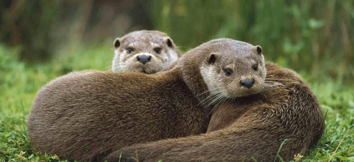 """An """"Otterly"""" Inspiring Experience"""